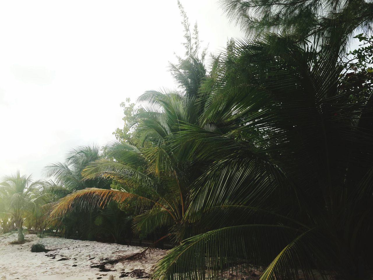 Islandlife