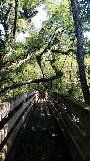 Hillsborough River Suspension Bridge Florida Trailblazer Florida View Nature Photography Florida Trees EyeEm Nature Lover