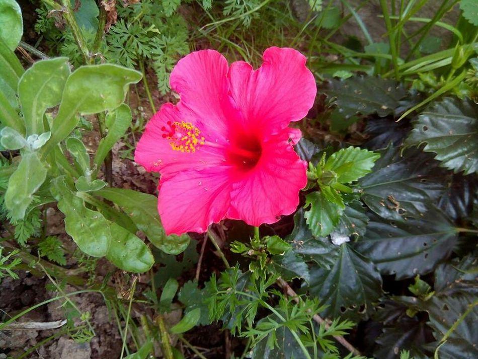 Jane's flower Flowers Beautiful Flowers English Woman Flower