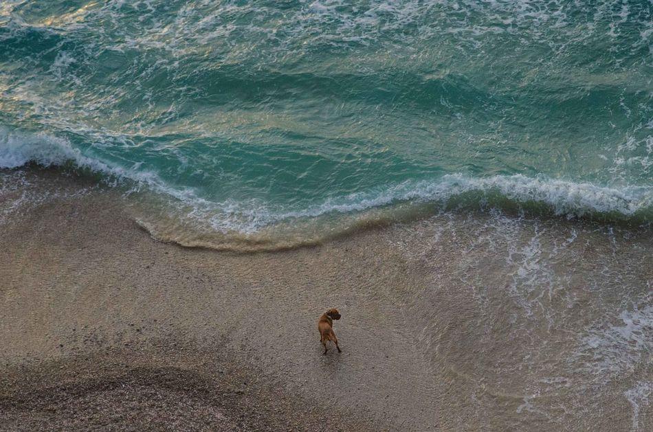 Beautiful stock photos of neujahr,  Aerial View,  Animal Themes,  Backgrounds,  Beach