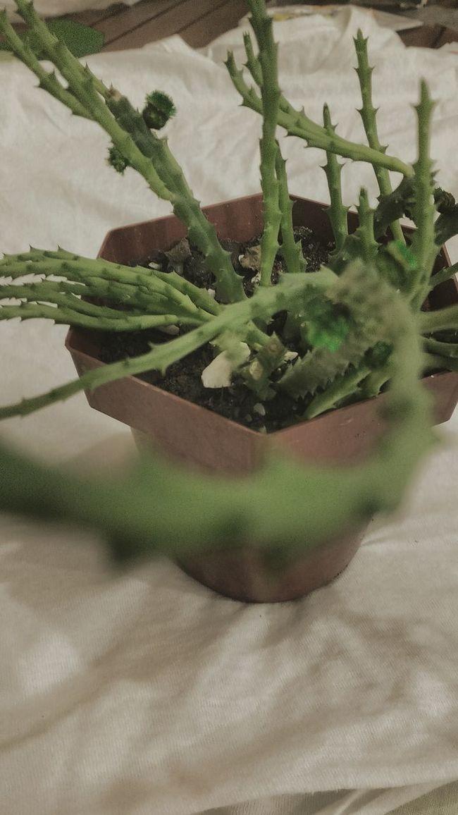 My Plant Plants And Flowers Plants 🌱 Plant Photography Leguminosa Leguminosae