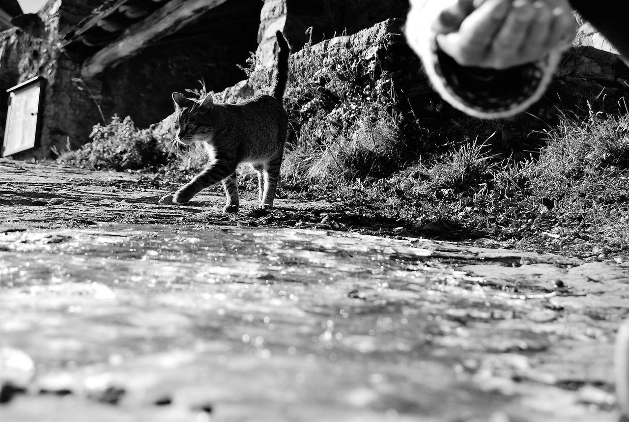 Mammal One Animal Animal Themes Domestic Animals Animal Wildlife Animals In The Wild No People Outdoors Day Nature Blackandwhite Photography Blackandwhite Bnw_collection EyeEm Bnw