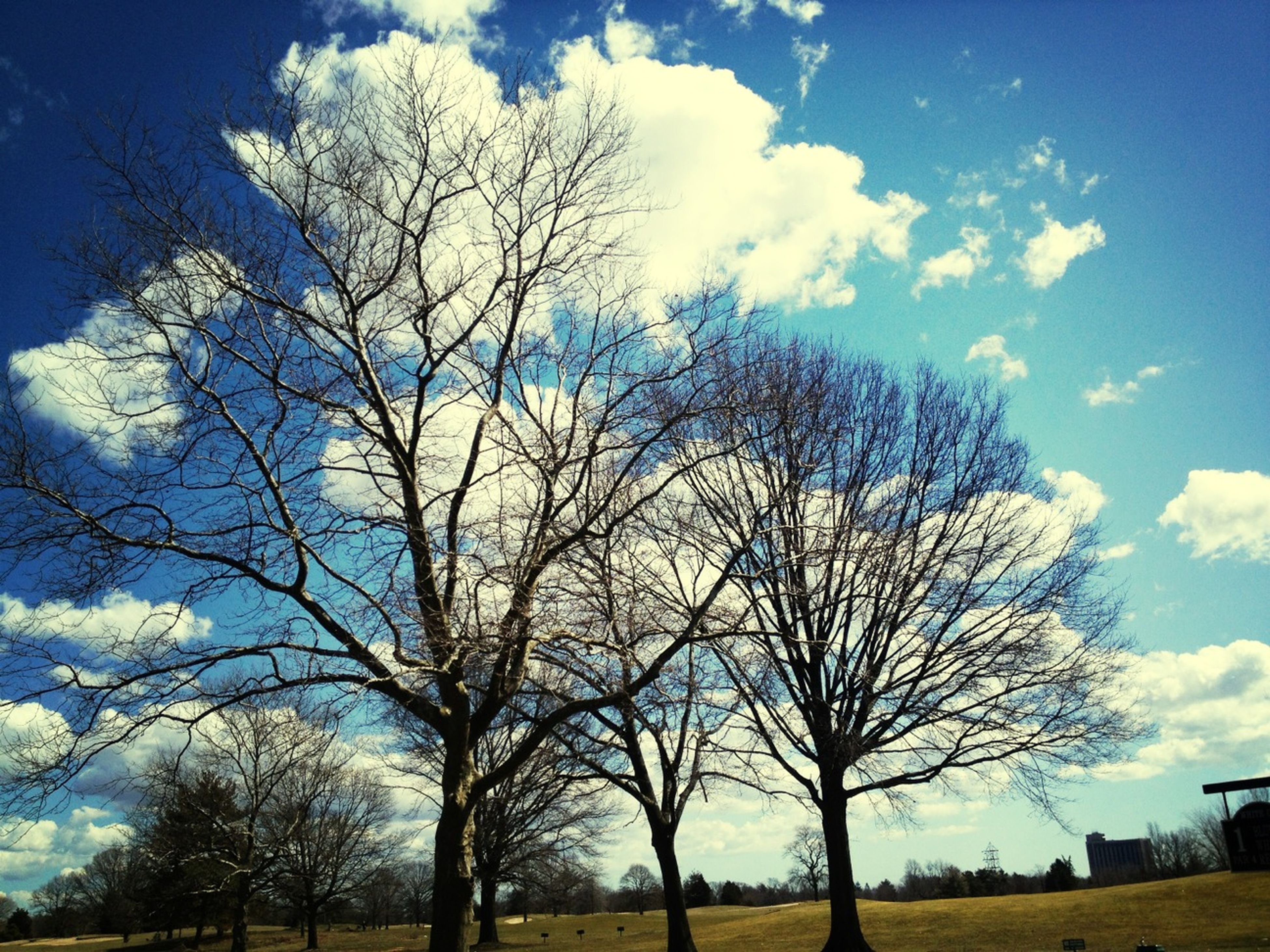 tree, bare tree, sky, branch, field, blue, tranquility, tranquil scene, nature, grass, beauty in nature, landscape, cloud - sky, scenics, sunlight, tree trunk, growth, cloud, day, low angle view