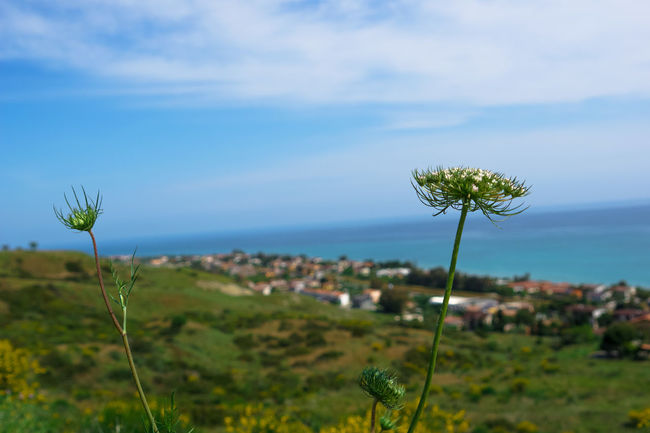 Beauty In Nature Calabria Calabria (Italy) Calabriadascoprire Cloud Cloud - Sky Day Flower Focus On Foreground Grass Green Color Growing Growth Horizon Over Water Idyllic Landscape Nature No People Outdoors Plant Scenics Sky Stem Tranquil Scene Tranquility