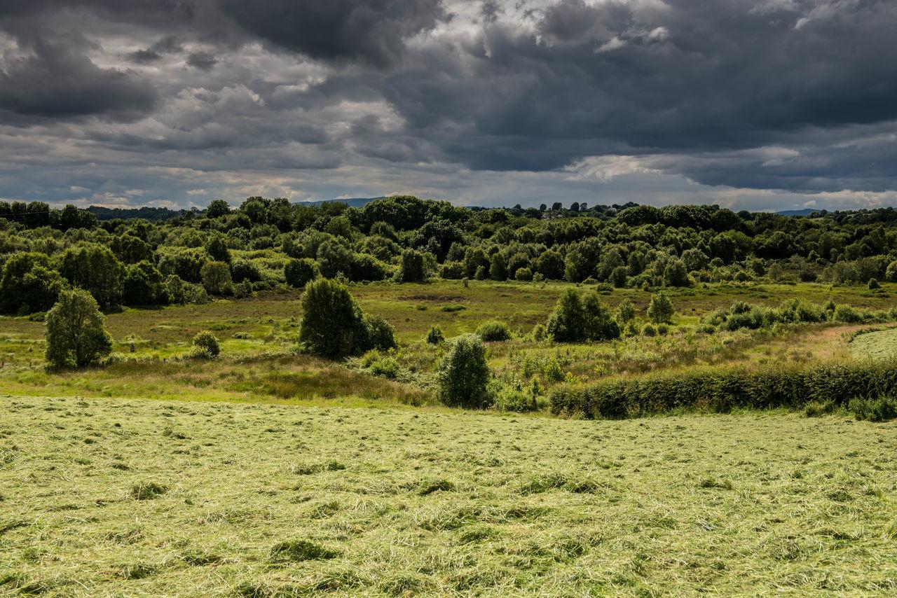 Clouds Derrylondonderry Forest Ireland🍀 Northern Ireland Peace And Quiet Peatland Seamus Heaney Skies Toner's Bog WoodLand