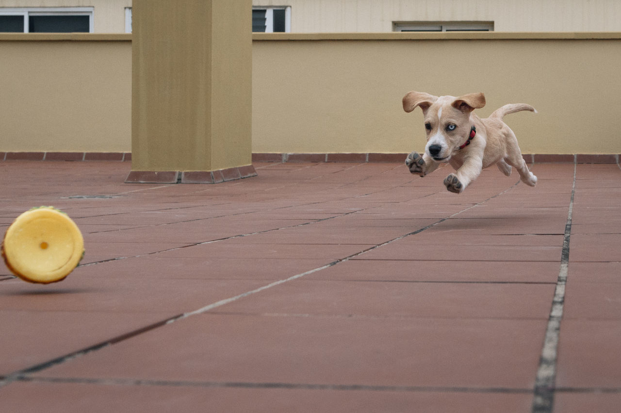 Animal Themes Animals Canary Islands Day Dog Dog Love Dogs Dogs Of EyeEm Dogslife Dog❤ Domestic Animals Love One Animal Outdoors Pet Pet Photography  Pets Puppies Puppy Tenerife