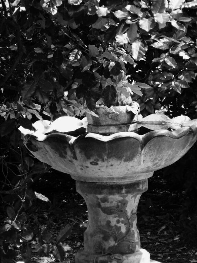 Bird Bird Photography Bird Bath Blackandwhite Black And White Relaxing Botanical Gardens Abstract Fort Worth Texas