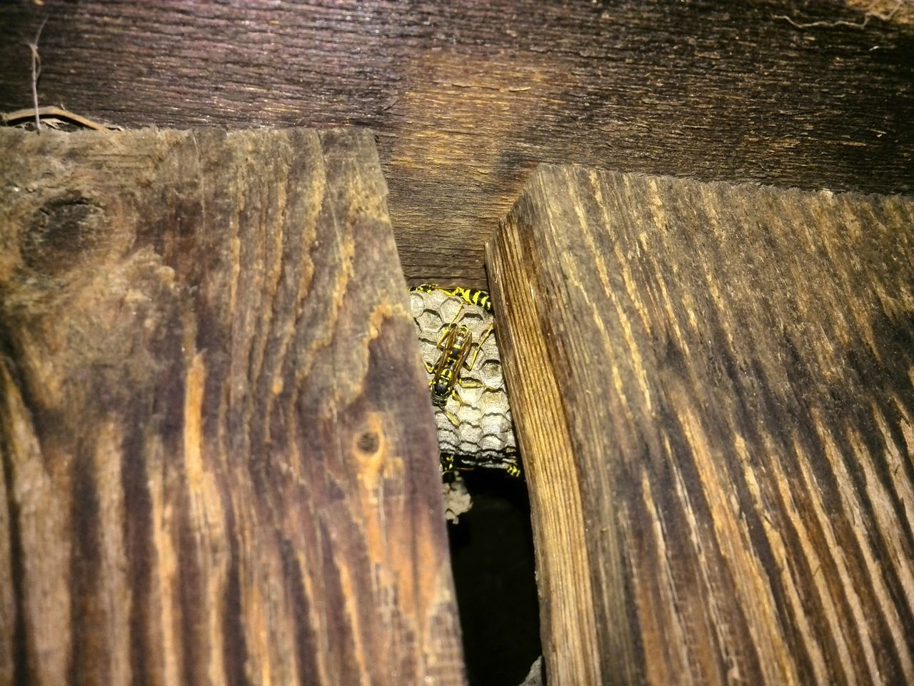 Eekers!!!! Building nest in the hen house walls! Night Night Photography Outdoors Insects  Bees Bee Nest Wasp Wasps Nests Wasps Nest Wood Wood - Material Wood Grain Attention To Detail Patterns In Nature