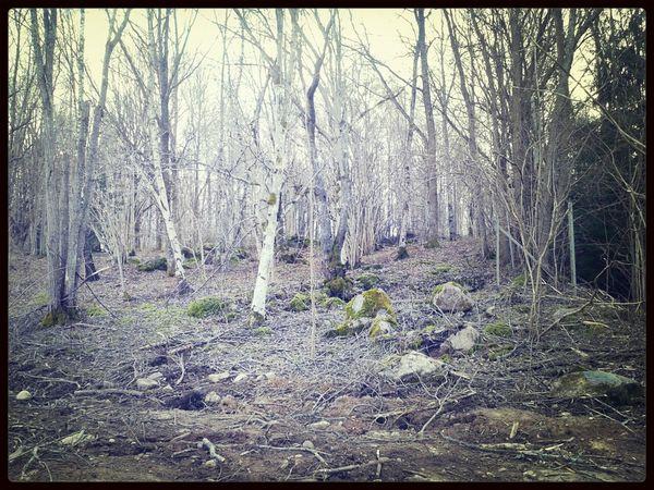Sweden EyeEm Nature Lover Hugging A Tree Landscape_Collection