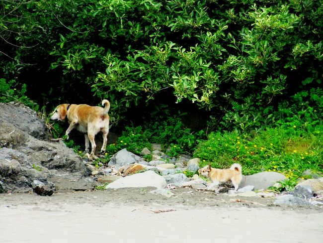 Hikingadventures Friends Follow Me Mini Me I Love My Dog Best Friends Traveling Dogslife Beach Bummin