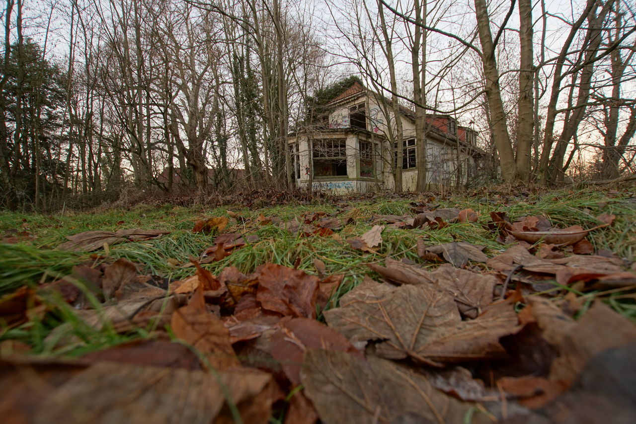 Derelict and overgrown farmhouse Architecture Autumn Autumn Autumn Leaves Bare Tree Beauty In Nature Building Exterior Built Structure Change Day Derelict Building Farm Farmhouse Forest Landscape Leaf Melancholy Nature No People Outdoors Ruin Sad Scenics Tree Trees