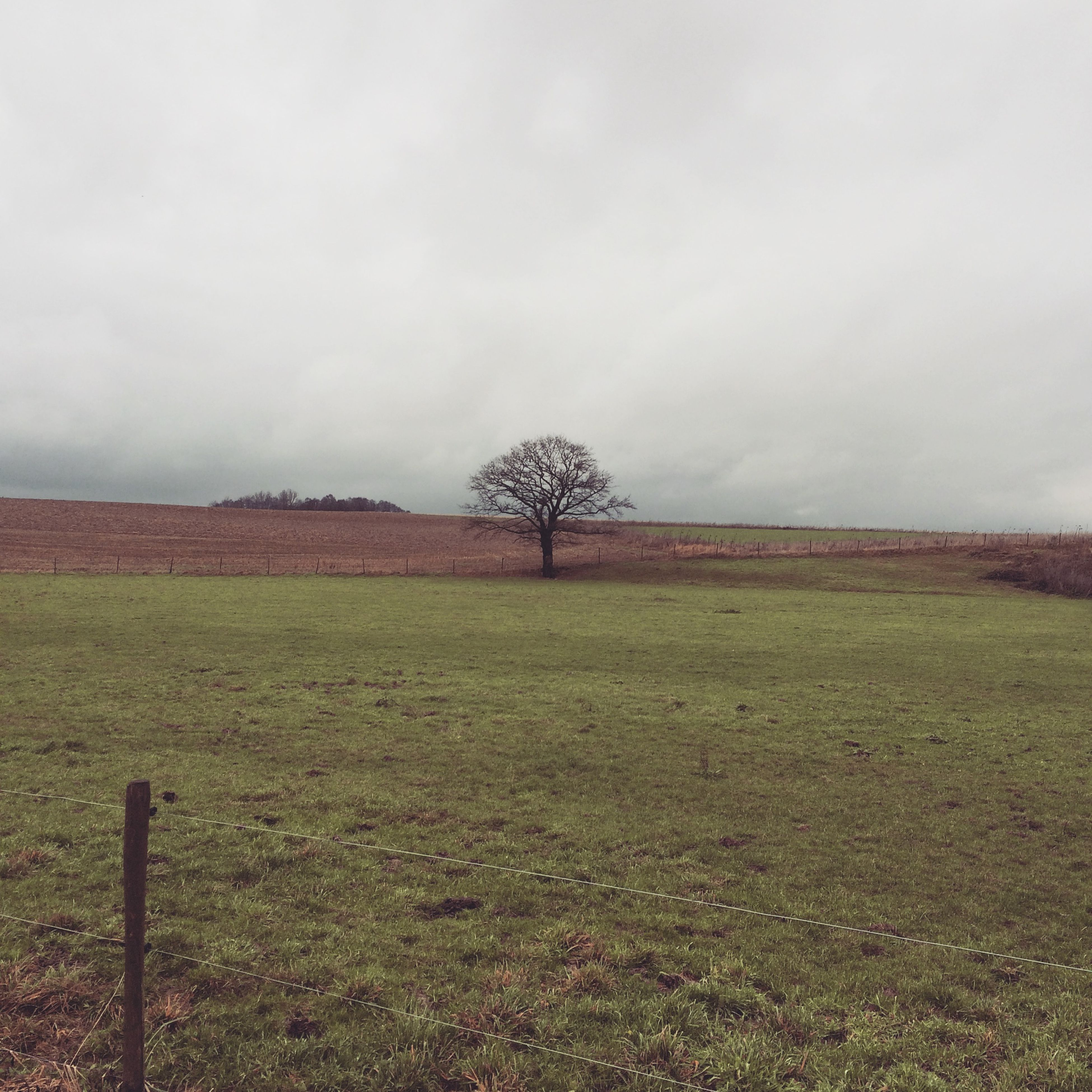 landscape, sky, field, tranquility, tranquil scene, grass, tree, scenics, nature, cloud - sky, beauty in nature, grassy, rural scene, non-urban scene, bare tree, fence, cloudy, growth, day, cloud