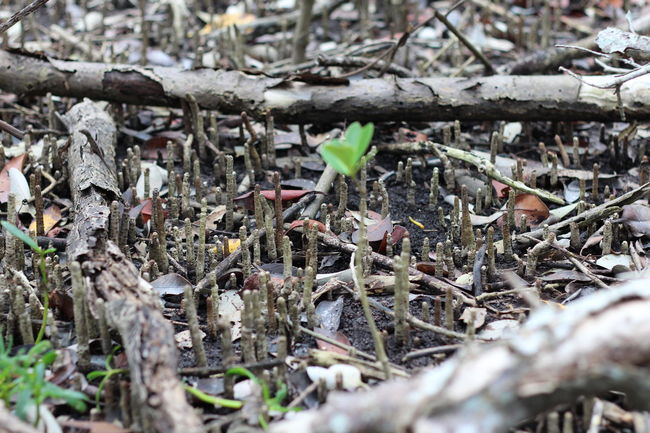 Beauty In Nature Close-up Leaf Mangroves Nature New Growth Season  Selective Focus