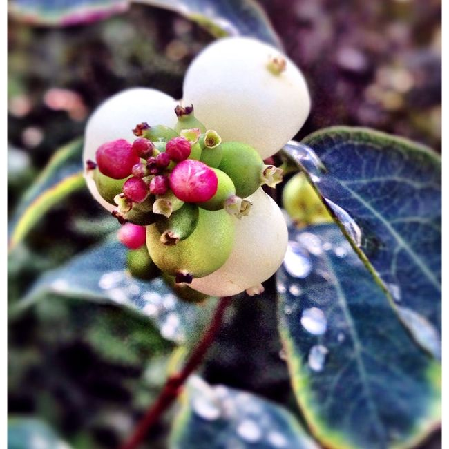 Plant Dew Drops Garden Nature