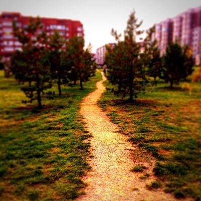 Path No People Day Nature Krasnoyarsk A Park Autumn 🍂