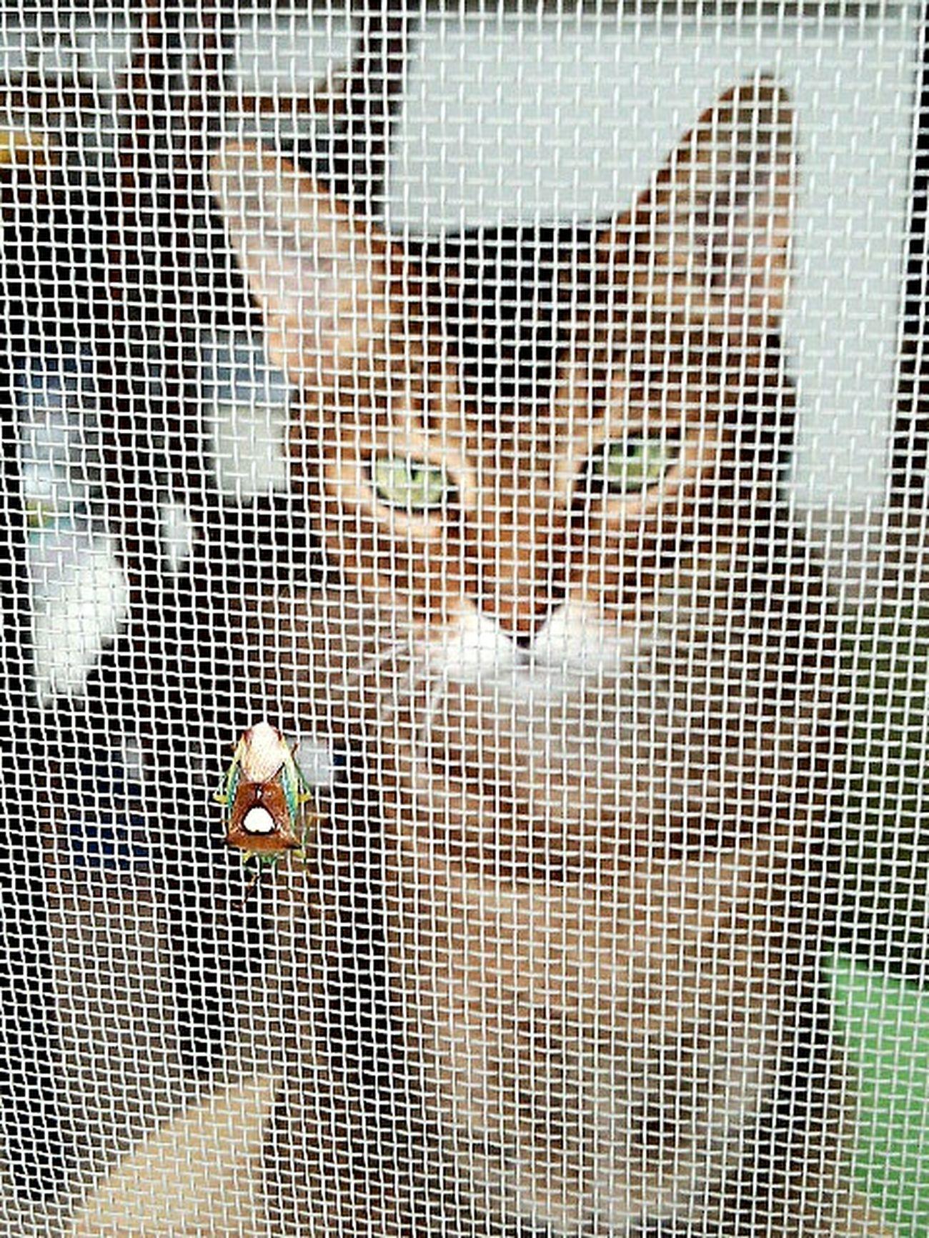 ニャコム発動!!! カメムシ Cat Animal Insect Stinkbug