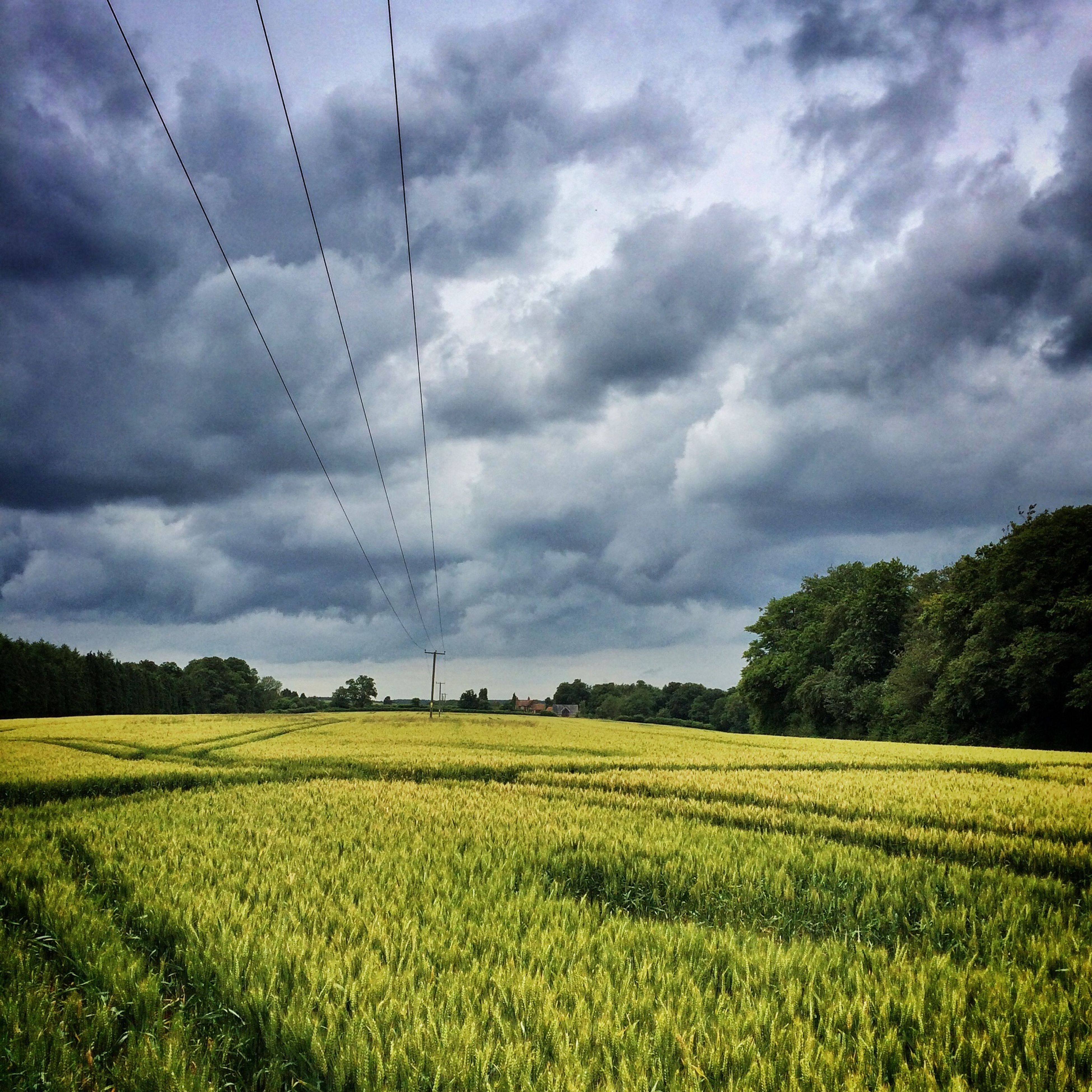 field, sky, landscape, agriculture, rural scene, tranquil scene, tranquility, cloud - sky, growth, farm, scenics, beauty in nature, nature, cloudy, crop, cultivated land, cloud, tree, grass, green color