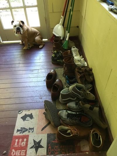 My Shoe Stop Dog Indoors  One Animal No People Shoesaddict Shoes Lifestyles Out Of The Box