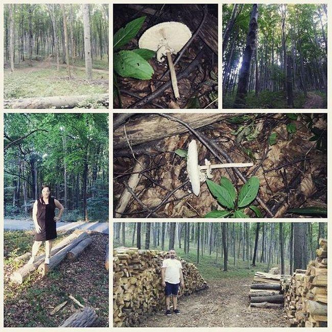 Weekend Love Woods Forest Bükk Sunshine