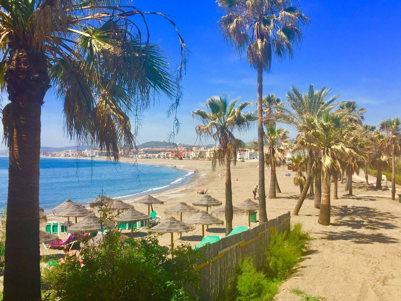 SPAIN Casares Costa Beach Palm Tree Tree Sea Water Sand Tranquil Scene Day Outdoors Nature Scenics Tranquility Beauty In Nature Tree Trunk No People Shadow Growth Blue Horizon Over Water Sky