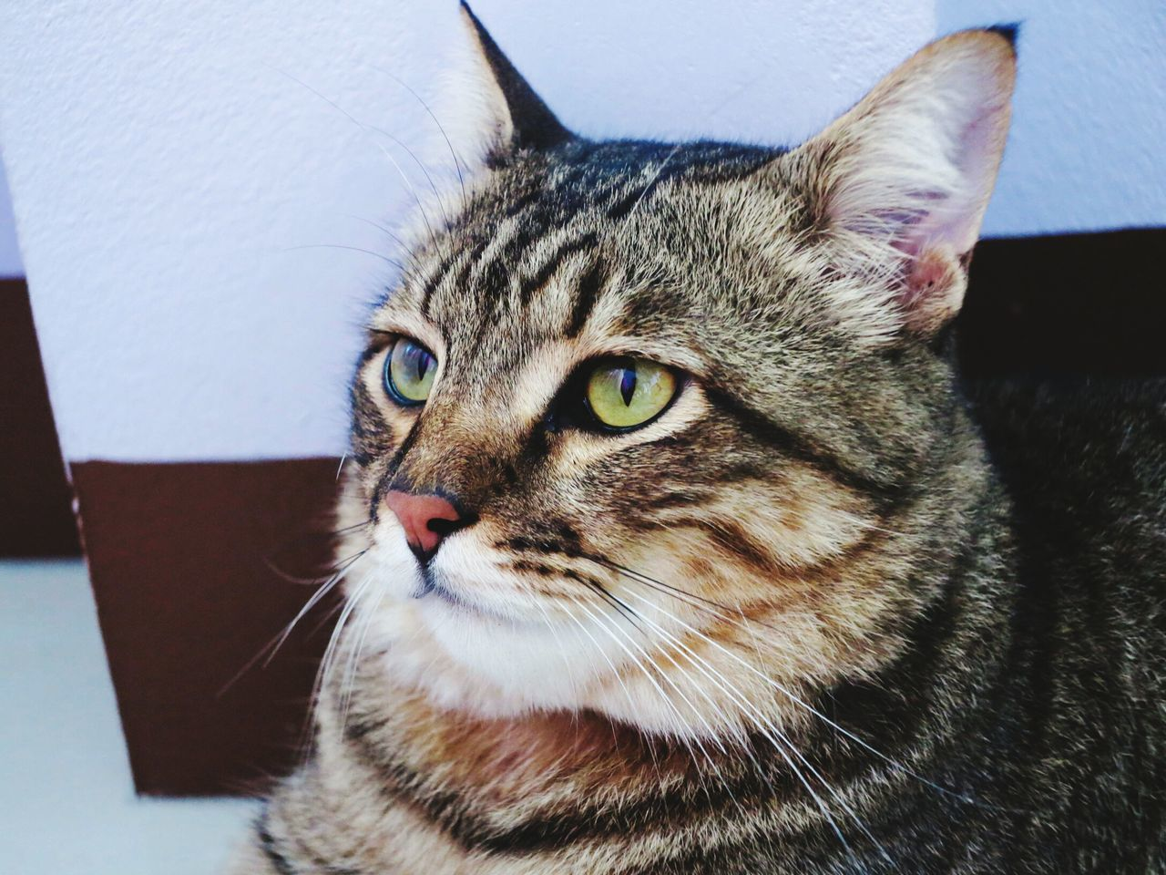 Animal Themes One Animal Domestic Cat Domestic Animals Pets Close-up Yellow Eyes Indoors  Whisker No People Lovelycat Cats 🐱 Cat Ocicat Catface
