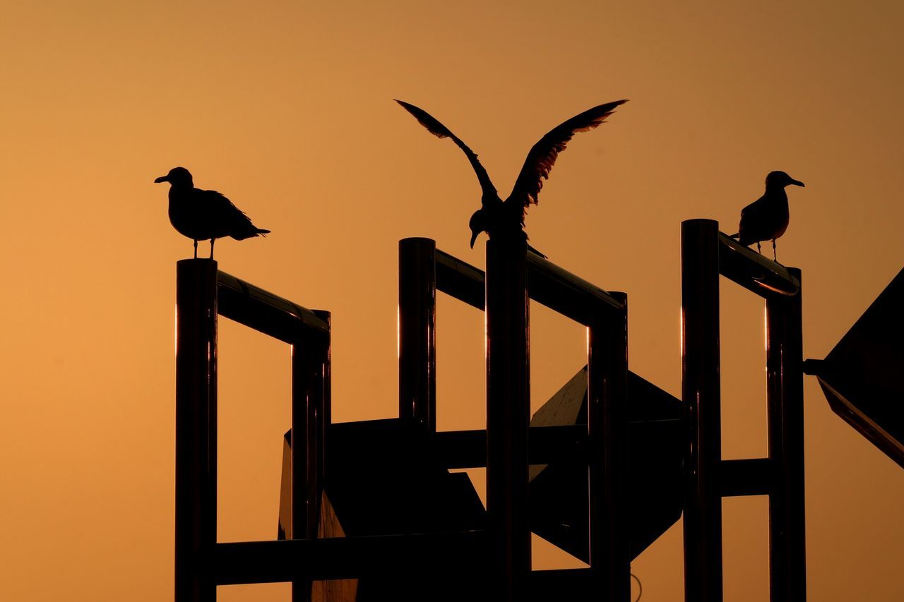 Sunset Bird Birds Sunsets Tokyo Sunset_collection Japan Blackheaded Gull
