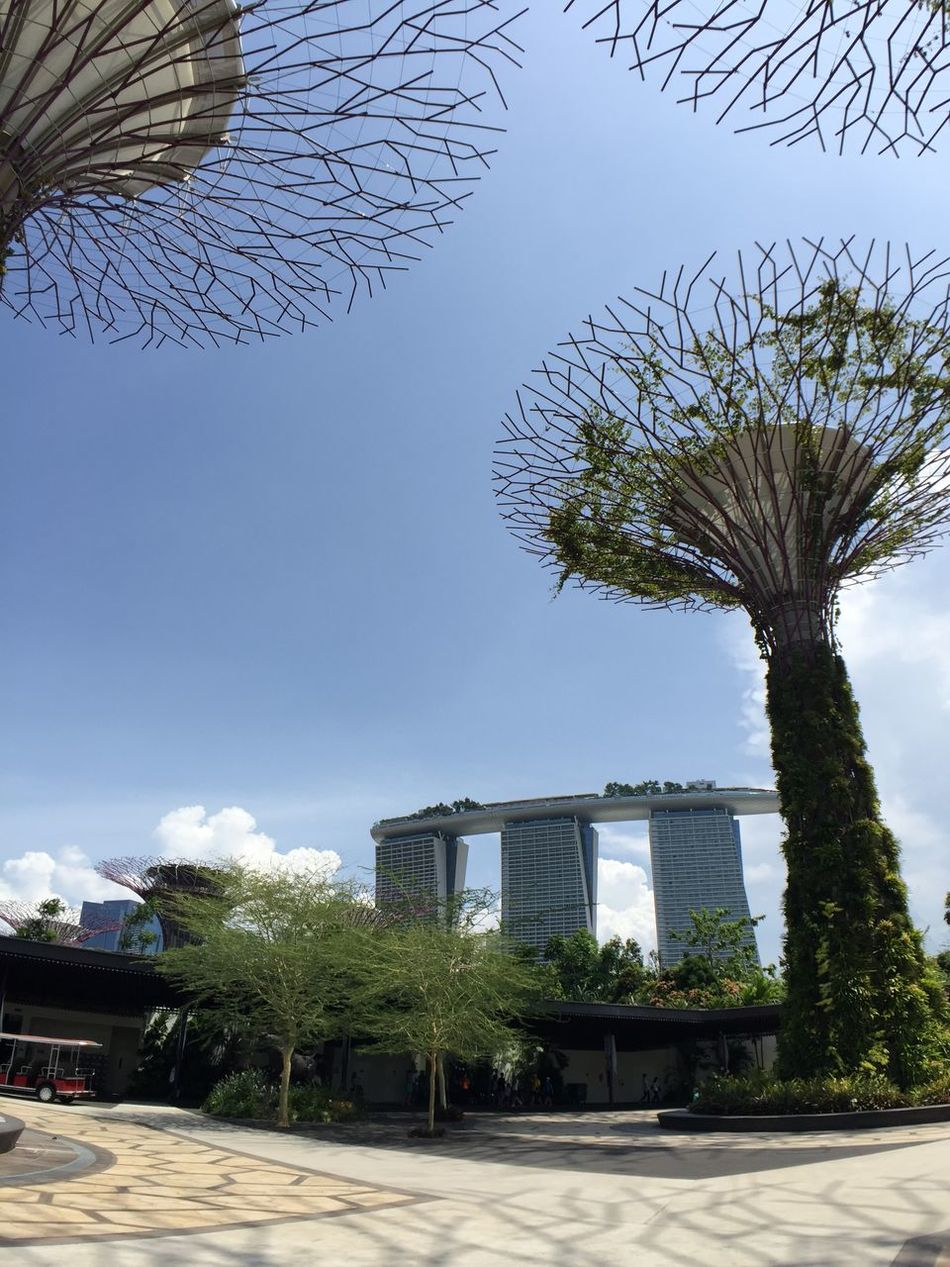 Power Trees @ Garden By The Bay Inmacus Smartimaging Iphone6 Wideangle IPhoneography Iphonephotography Iphonegraphy Iphonegrapher Mobilephotography Mobile Photography
