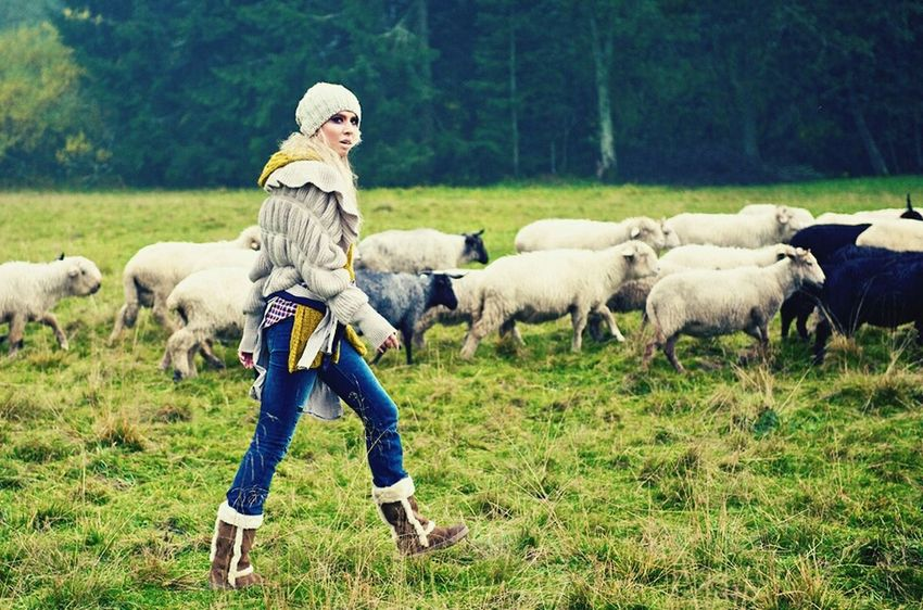 In The Forest Sheep Model Modeling In The Rain Polish Mountains Photosession
