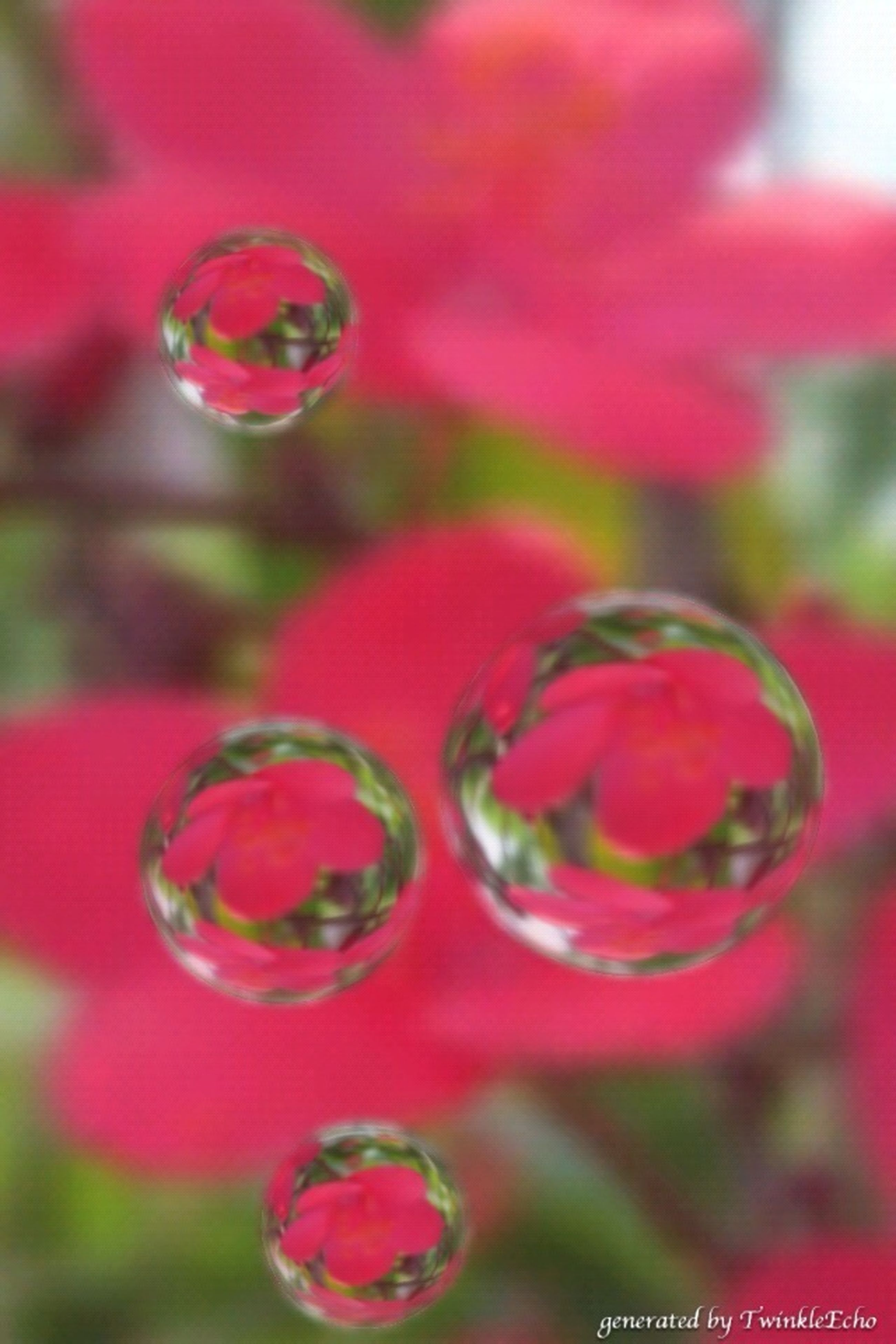 red, focus on foreground, close-up, selective focus, fragility, freshness, flower, pink color, drop, beauty in nature, nature, growth, plant, water, no people, day, outdoors, bud, transparent, stem