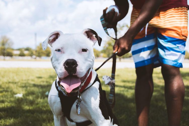 Made a new friend. Bridgeport, Connecticut (2015) Dog Domestic Animals Pets One Animal Grass Outdoors Day Pit Bull Terrier Sky Animal Animal Love Canon Issa Khari Issa Fresh On Market 2017