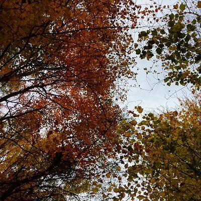 Hello, Vermont! Fallcolors Fall Igvermont Ignewengland greenmountainstate underhillvt goodmorning photooftheday instagood vt vtphoto vermont