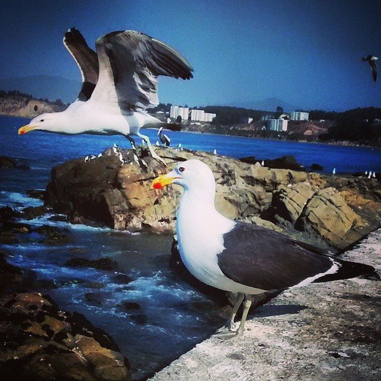 2016 Followme Followyou Followforfollow F4F Followback Lokeforlike Like4like Picoftheday Photo Instapic Instafoto Instacolors Instafollowers Instamoment Smile Photograph Instacamera Goodmoment Memoriesforlife Bird Seagulls Ocean Landscape Attherighttime chile