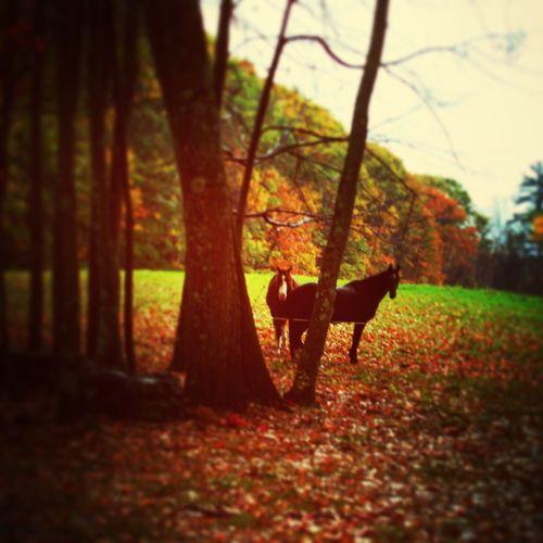 EyeEmNewHere Autumn Animal Themes Nature Day Outdoors Mammal Tree Horses