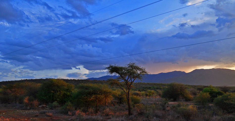 Lone tree Tree Cloud - Sky Sky Landscape Beauty In Nature Mountain Nature Outdoors Lonetree Sunset Dusk Dusk Sky