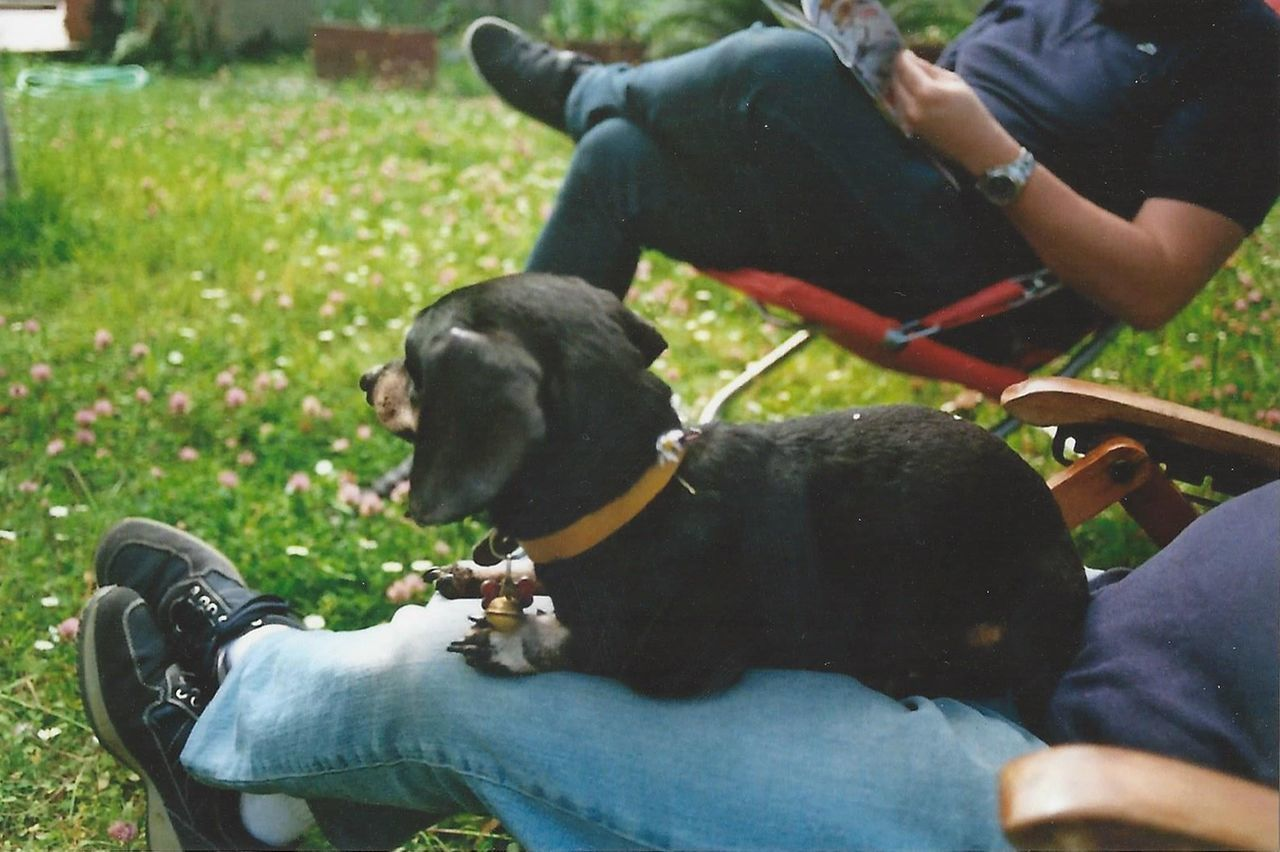 Dog Domestic Animals Pets One Animal Mammal Day Adults Only People Sitting Adult Only Men Leisure Activity Outdoors One Man Only Lifestyles Young Adult Protruding One Person Men Grass Film Dachshund Animal Themes Legs Live For The Story BYOPaper! The Street Photographer - 2017 EyeEm Awards Sommergefühle