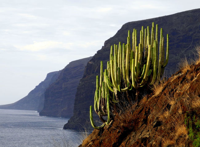 Los Gigantes on Tenerife Beauty In Nature Day Green Color Growth Idyllic Landscape Los Gigantes Mountain Nature No People Non-urban Scene Outdoors Plant Rock Formation Scenics Tenerife Tranquil Scene Tranquility