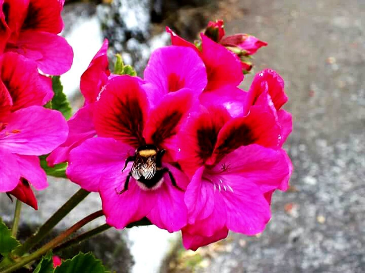 insect, one animal, flower, animals in the wild, petal, animal themes, nature, growth, bee, animal wildlife, outdoors, beauty in nature, fragility, day, no people, pink color, pollination, flower head, plant, freshness, blooming, close-up