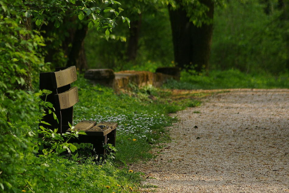 Beautiful stock photos of peaceful,  Bench,  Day,  Footpath,  Grass