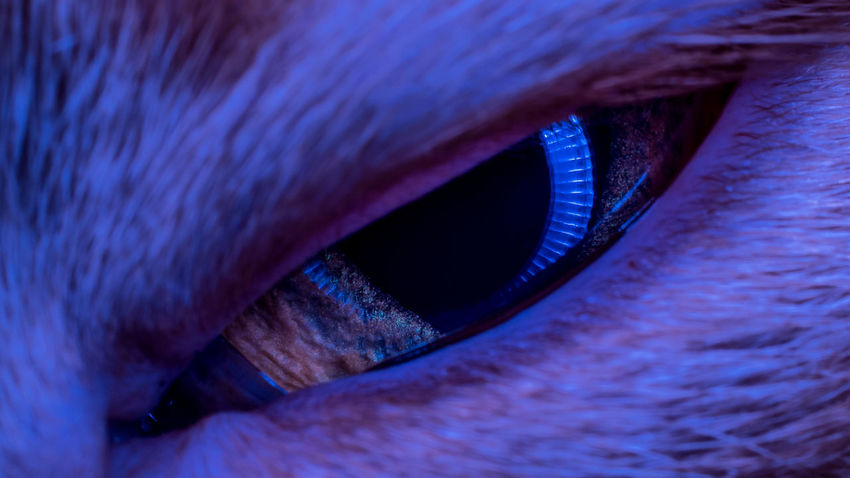 Cat Cats Animal Animals Eye Cat's Eye Closeup Close Up Close-up Macro Macro Photography Macrophotography Macroclique Pet UV  Psychedelic Colors Catchlight