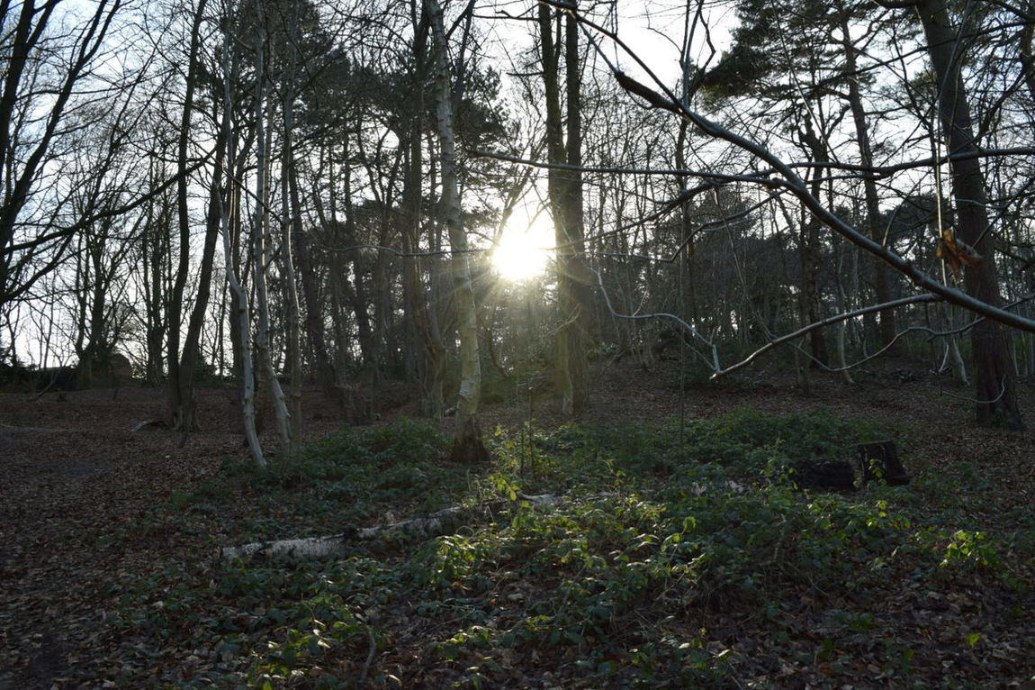 Taking Photos Eye For Photography Nikon D3300 The Purist (no Edit, No Filter) Straight Out Of The Camera Winter Trees In The Woods Sun_collection Breaking Through  Mouseholdheath Norwich Fallen Leaves