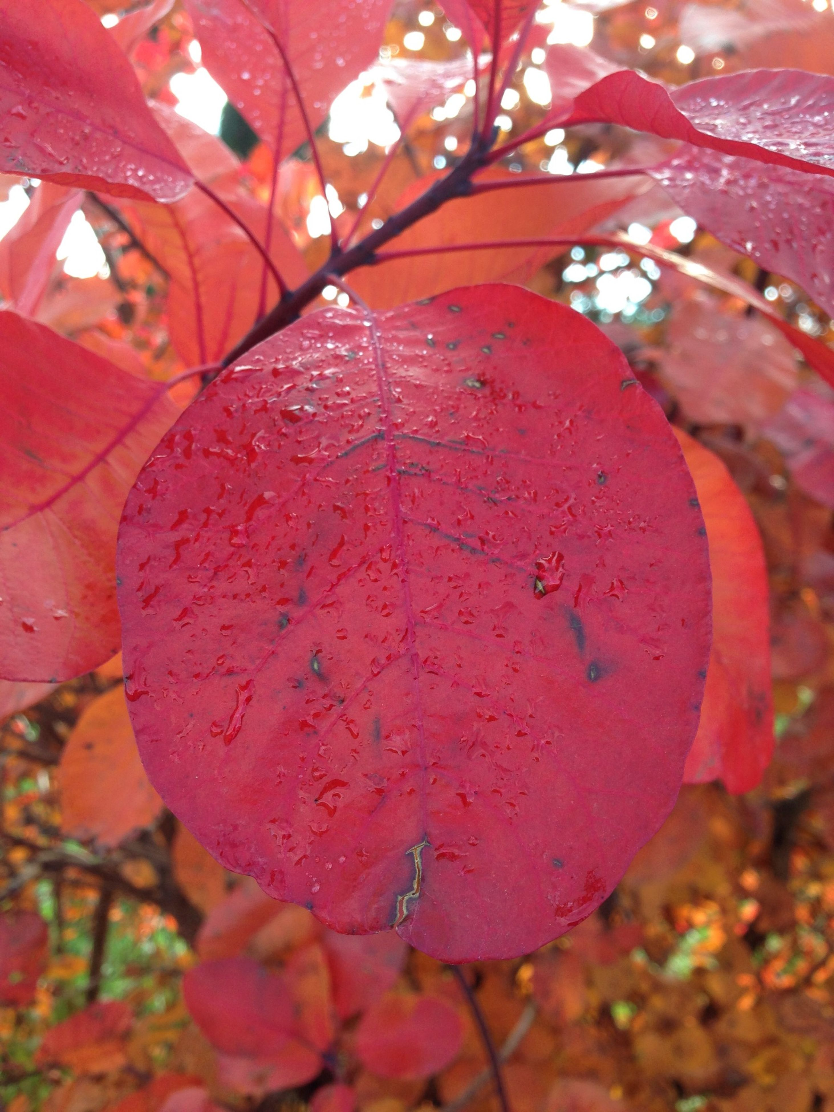 red, growth, close-up, freshness, focus on foreground, nature, tree, season, beauty in nature, leaf, branch, fragility, selective focus, day, outdoors, no people, autumn, flower, plant, drop