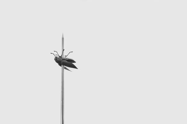 Jan Fabre Bug Bugs Beetle Blackandwhite Black And White Black & White Blackandwhite Photography Black And White Photography Black&white Blackandwhitephotography Monochrome Monochromatic Canon Canonphotography Canon 70d Canon_photos Canon_official Canon Eos  Canon EOS 70D Eos 70d Canon Camera DSLR Leuven Sky