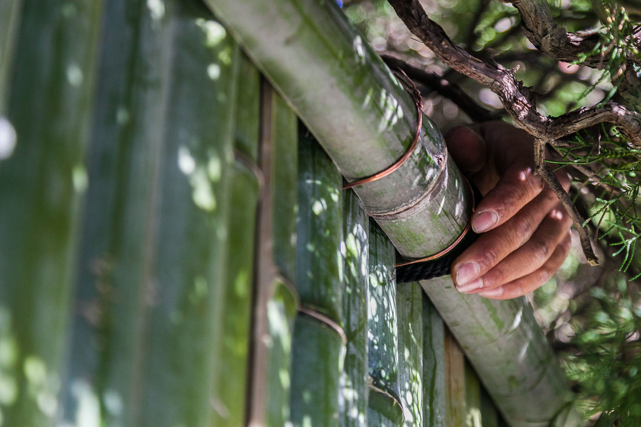 Hand out of the green Bamboo Bamboo Fence Close-up Green Human Body Part Human Hand Nature One Person Outdoors Real People Tree