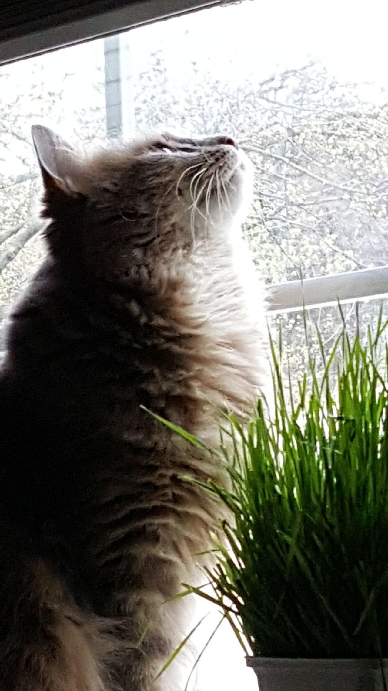 One Animal Domestic Animals No People Mammal Day Outdoors Nature Pets Water Animal Themes Close-up Taking Photos Catnipaddict Catnip Caturday