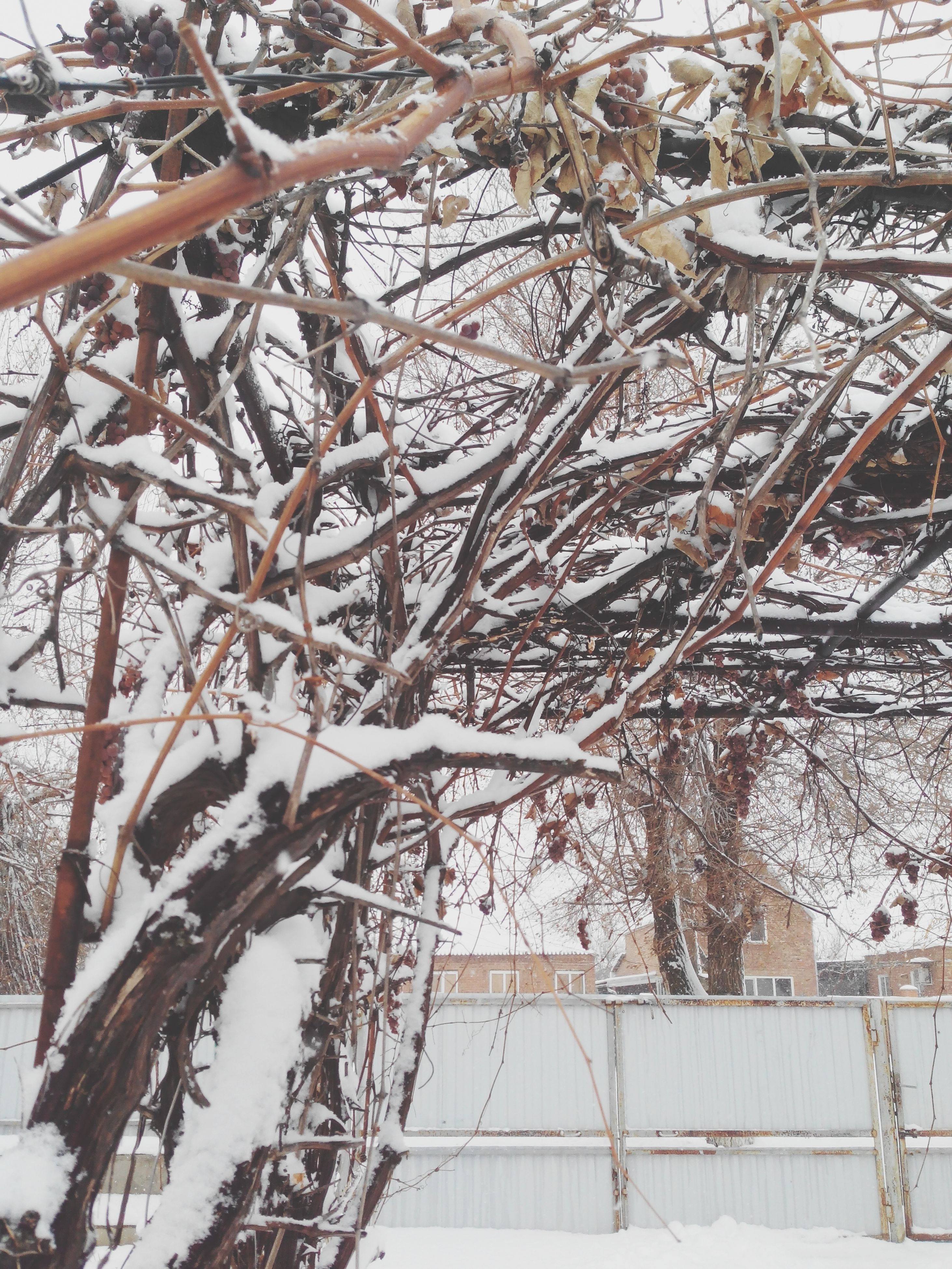 bare tree, snow, winter, cold temperature, architecture, built structure, building exterior, branch, tree, season, weather, covering, day, low angle view, nature, outdoors, frozen, city, no people, sky