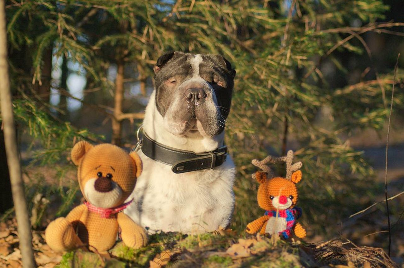 Teddy Bear Toy No People Stuffed Toy Outdoors Rentier Reindeer Teddy<3 Teddy Haustier Haustiere Looking At Camera Hunde Hund Dog Shar Pei Dog Photography Hundefotografie Liebe ❤ Love ♥