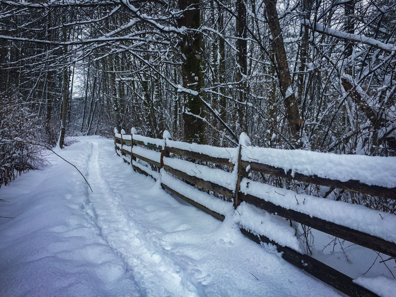 BC winter