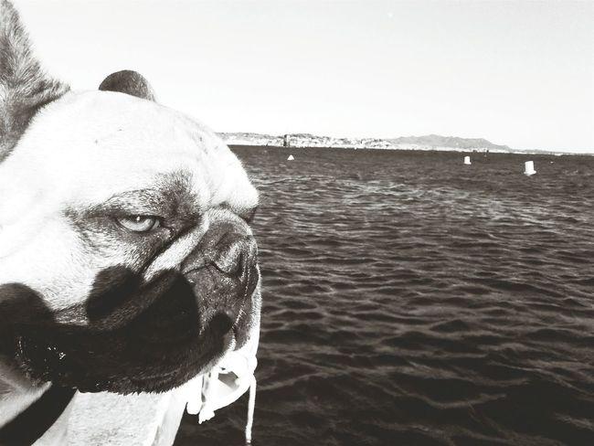 Taking Photos Frenchbulldog Cute Pets Summertime Blackandwhite Dog