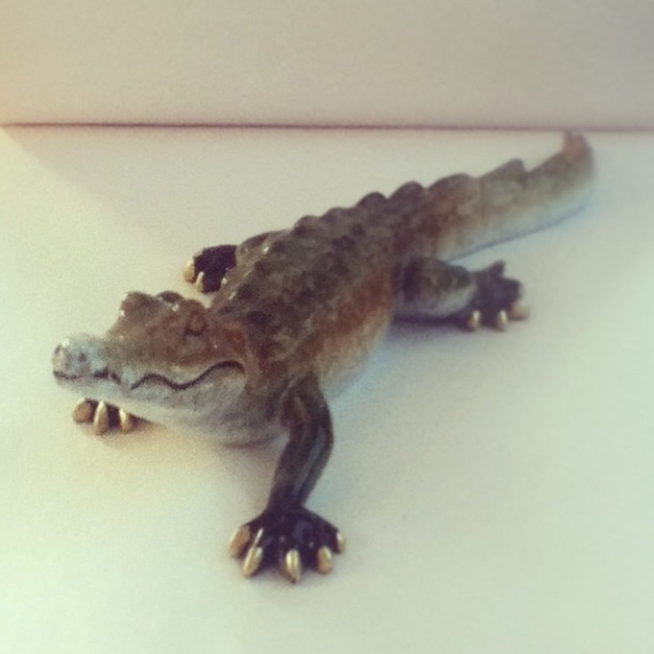 My little brother's model Alligator he got today. ? Just thought it was kinda cool. Alligator Model Ussnorthcarolina Brother itouch camera instagram summer