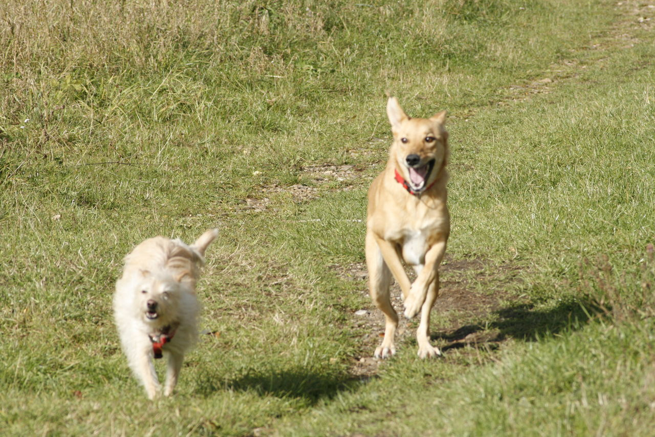 Taking Photos Check This Out Hello World Enjoying Life Outdoor Photography Outside Yeah Springtime! The Essence Of Summer Freedom Having A Great Time Dogslife Dogs Of Summer Dogs Running  Yeah Sum